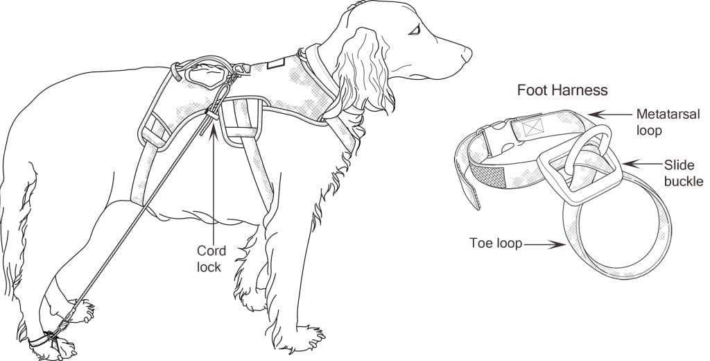 Canine Mobility Anti-Knucking Device illustrations