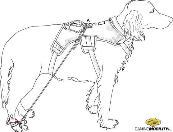 Canine Mobility paw illustration for measurements A-B and C