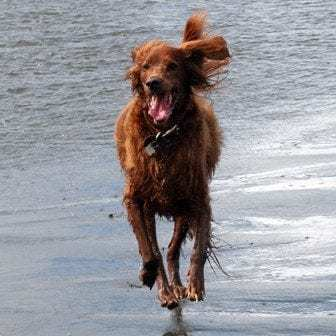 Reilly at 8 years old, running at Copalis Beach on the Washington coast