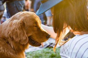 Your Guide to Caring for an Aging Animal Companion