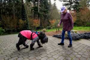 Reliable resources for treating our ailing pets