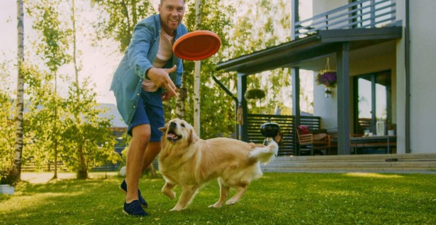 44 Fun Activities to do with Your Dog